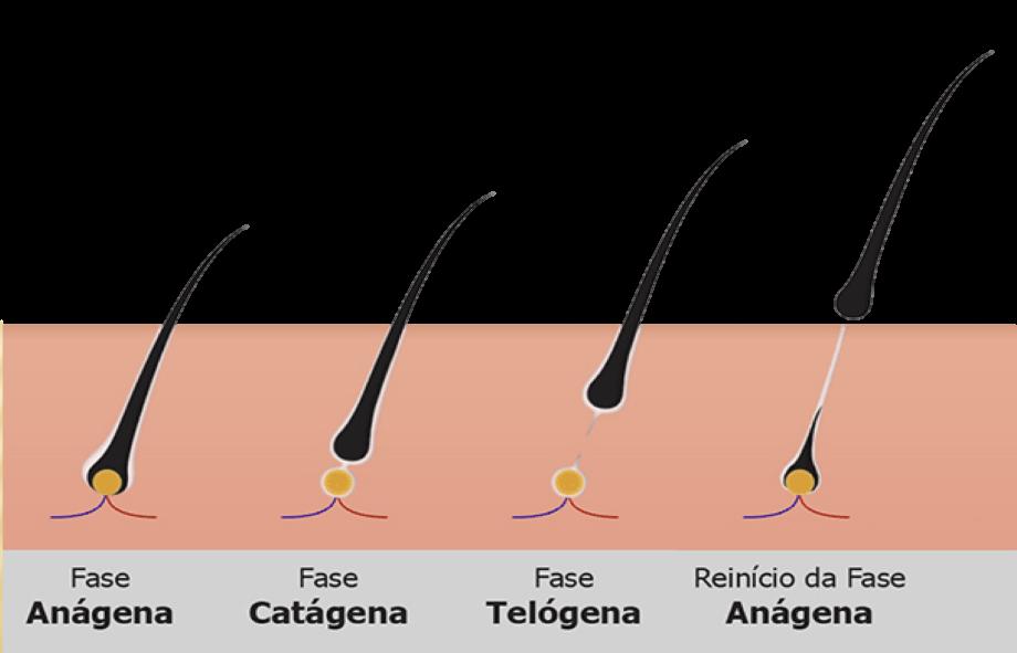 O medicamento atua na base do folículo capilar
