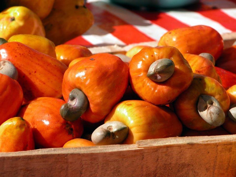o caju é uma fruta rica em cobre, mineral importante para a saúde capilar