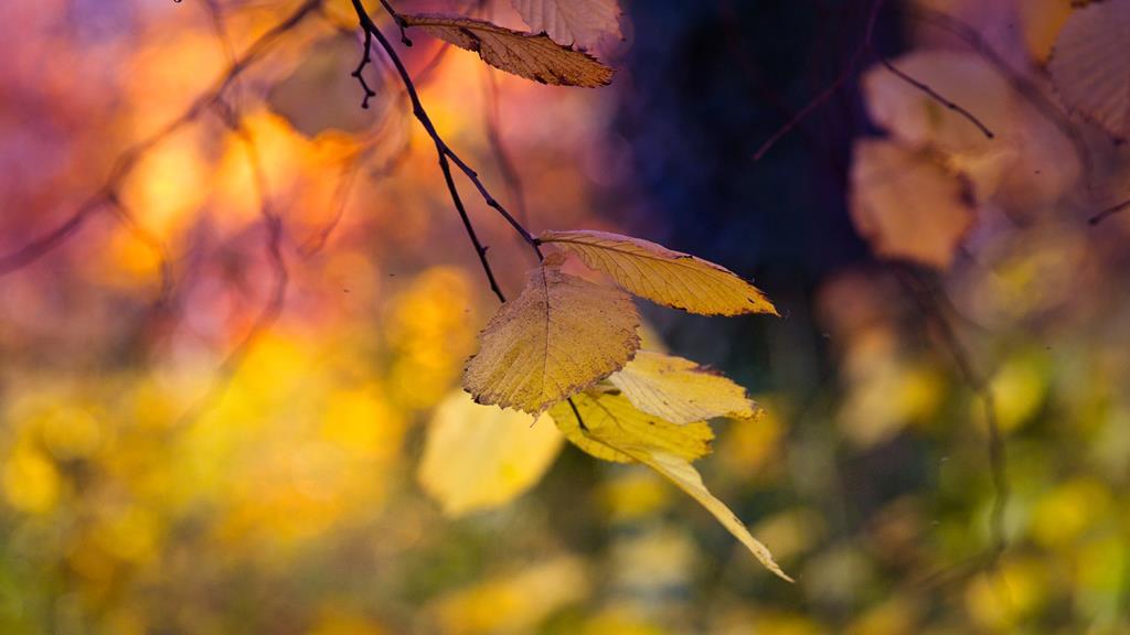 durante o outono é comum que haja um pequeno aumento da queda capilar em decorrência do frio